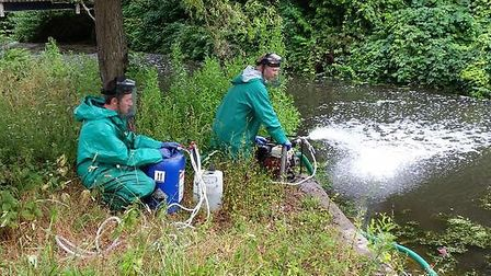 The Environment Agency out saving fish on the River Lark at Bury St Edmunds.