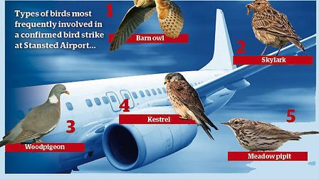 Bird strikes at Stansted