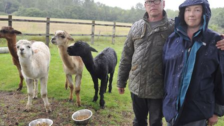 Lee Smith and Liz Marley are distraught after Galaxy, one of their pet alpacas, had to be put down a