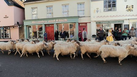 The Hadleigh year of the sheep finale with sheep being driven down the High Street.