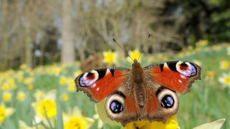 The Bugs and Blossoms weekend at Palgrave, near Diss, will highlight the decline of native insects a