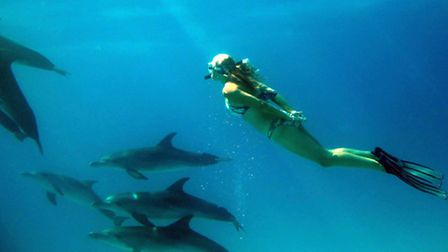 Jenny Cook swimming with wild dolphins off Bimini