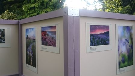 Part of the International Garden Photographer of the Year exhibition at Beth Chatto Gardens, near Co