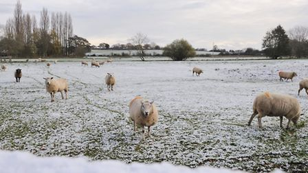The fields around Yoxford had a light dusting of snow of Saturday night.