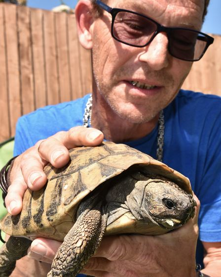 Timmy Tortoise is looking for love and his owner Andrew Gipson hopes to find him a mate rather than