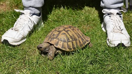 Despite being set up with dates to try to bring him out of his shell, Timmy Tortoise has been single