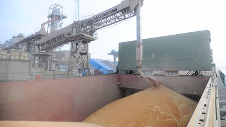 Grain being loaded for export at Ipswich dock, operated by Nidera.