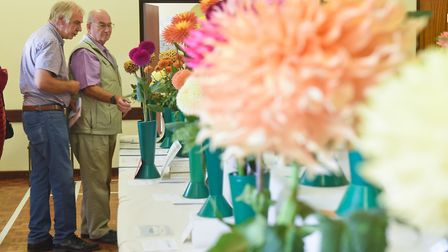 Judging under way at the Diss & District Horticultural Society early autumn show at Roydon Village H