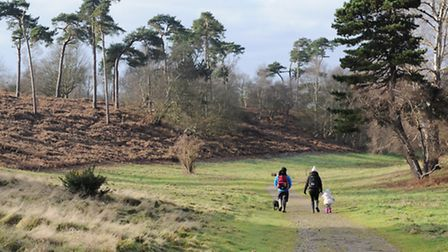 A crisp winter morning at Sutton Hoo. Suffolk has some fantastic walking country