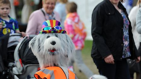 Unusual sights on the second day of the Suffolk Show 2015.