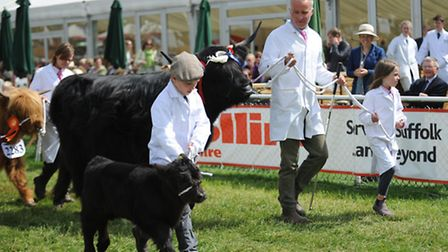 Thousands of visitors enjoyed the second day of the Suffolk Show 2015. The grand parade.