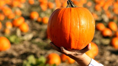 The Fairyland Trust is hoping to encourage people to go new plastic free with their The Real Hallowe