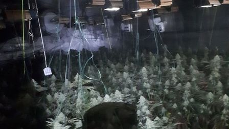 Cannabis plants estimated to be worth £60k discovered inside an industrial unit near Eye following a