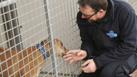 The new law aims to reduce the number of strays which end up with services such as Blue Cross