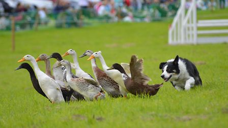 Colchester Town and Country Show