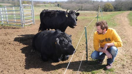 A friends father kept Gloucester cattle, which sparked his fascination with traditional breeds. Rea