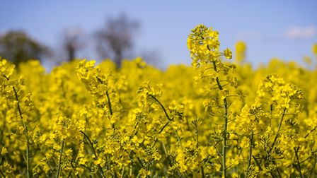 The NFU was hoping to persuade DEFRA to allow farmers emergency use of neonicotinoids to combat pest