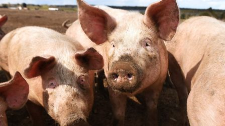 Increased exports of UK pigmeat to China have boosted the trading division of Norish.