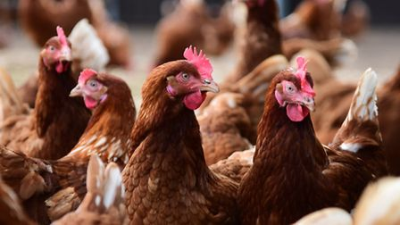 Poultry keepers have been put on alert over a strain of bird flu.