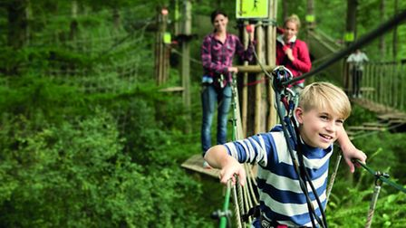 The junior tree top course at Go Ape! Thetford