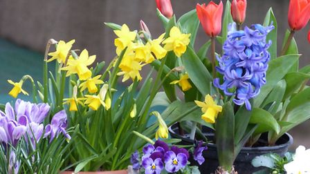 Plant out in spring for an instant boost to your borders