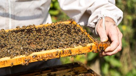 East of England Co-op Producer of the Year awards shortlisted supplier Great Tilkey Honey.