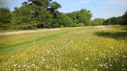 The B-Lines network co-ordinated by Buglife has won the prestigious European Landowners Association'