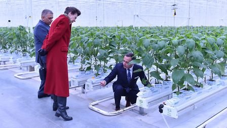 Jimmy Russo (left) and Vince Russo with the Princess Royal on a visit to Lea Valley Growers at Nazei