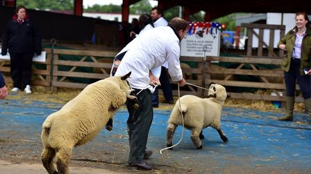 Thousands of visitors flocked to the second day of the Suffolk Show 2016. Picture: SARAH LUCY BROWN