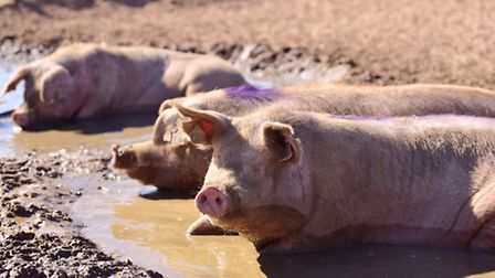 The value of EU pork exports rose last year.