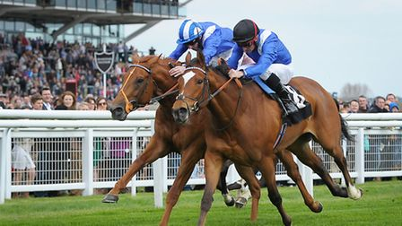 Mutakayyef, on the left, is favourite for this afternoon�s Winter Derby at Lingfield Park.