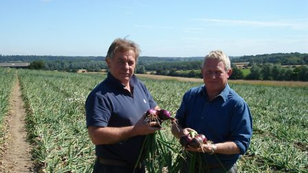 P G Rix (Farms) Ltd, Lodge Farm, Great Horkesley grows 370ha of onions. Pictured are brothers John a
