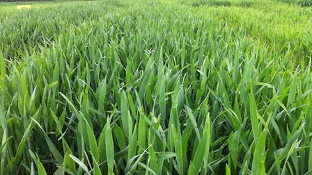 Grain trader Gleadell Agriculture has announced an agreement with Azotic Technologies to develop and