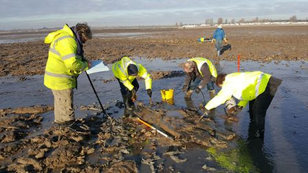 Members of the CITiZAN team cleaning the timbers discovered at Mersea Island before they are lifted