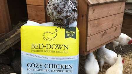 Metfield firm Bed-Down has launched a new poultry bedding product, Cozy Chicken