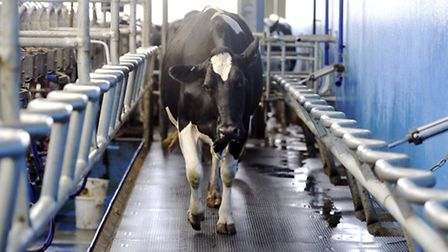 English dairy farmers continue to see falls in their incomes, according to the latest DEFRA figures.