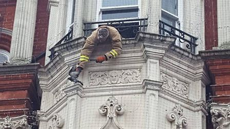 Pigeon being rescued from the netting above the Lloyds bank on Tavern Street. Picture: IZZY MAGYAR