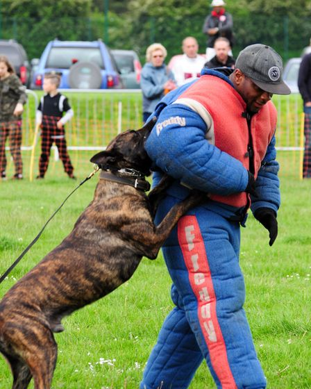 The show also includes the festival of dogs and canine display teams. Photo: Contributed
