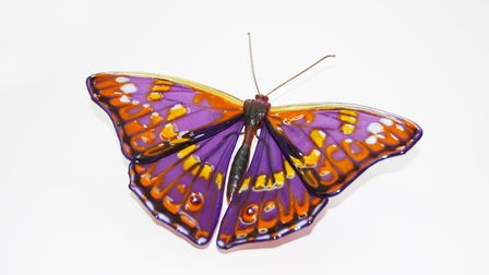 A lesser spotted Purple Emperor Butterfly. Picture: LAURA HART