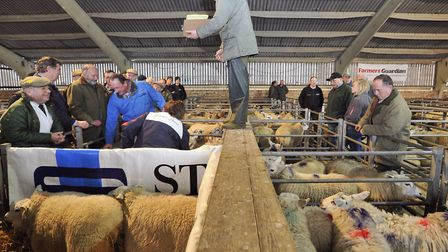 Graham Ellis auctions sheep at the Colchester cattle market.