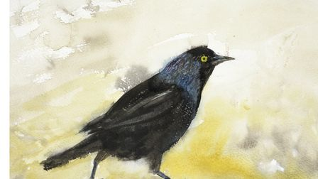 Jackdaw, Battersea Park, by Tory Lawrence, part of her new Horses and Birds exhibition. Picture: DOU