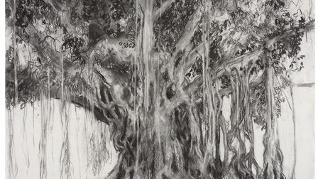 Banyan Tree, Columbo, 2015, part of Jelly Green's exhibition at the Alde Valley Spring Festival. Pi