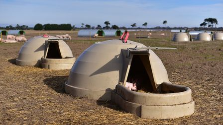 Adrian Lawson has launched a new type of pig housing called Aardvarks. Picture:Sarah Lucy Brown