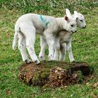 The row over some British retailers sourcing lamb from New Zealand and Australia over the Easter per