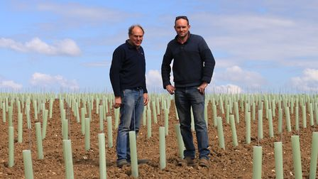 Stuart and James Scarff among the new vines planted at their farm in Combs near Stowmarket