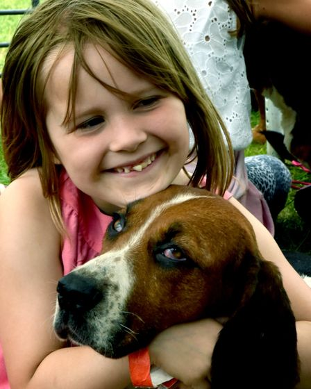 Chiarah Ruby- Budd, 7, from Needham Market, making friends with the De Burgh and North Essex Basset