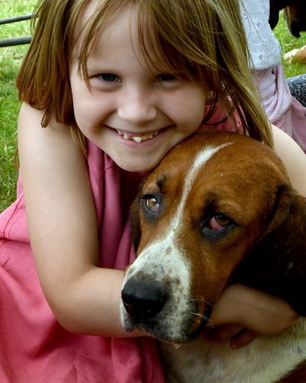 Chiarah Ruby- Budd, 7, from Needham Market making friends with the De Burgh and North Essex Basset