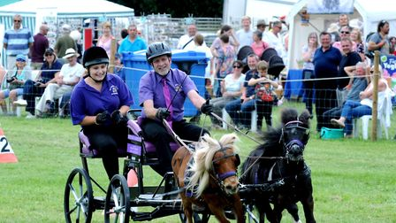 Nigel Sycamore from Bury St Edmunds with his miniture ponies Sooty and Sweep in the carriage driving