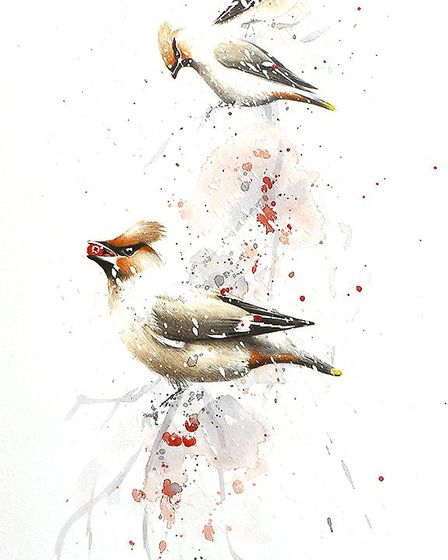 Waxwings. Picture: PAUL DYSON