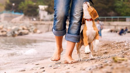 Which beaches can you take your four legged friends too? Picture: VETS NOW